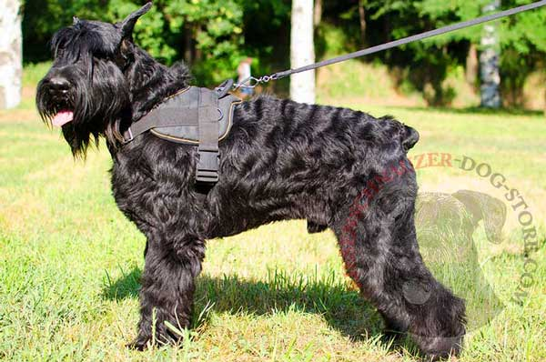 Nylon Harness for Riesenschnauzer with Easy in Use Quick Release Buckle