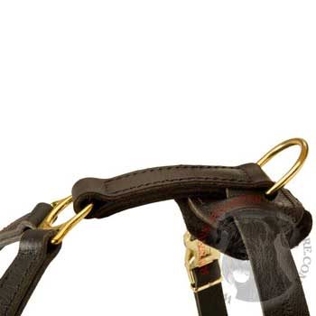 Corrosion Resistant D-ring of Riesenschnauzer Harness