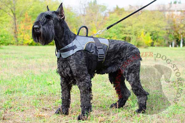 Nylon Vest Harness for Riesenschnauzer Healthy Recovery