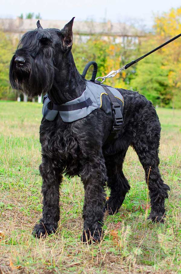 Nylon Vest Harness for Riesenschnauzer Winter Warming
