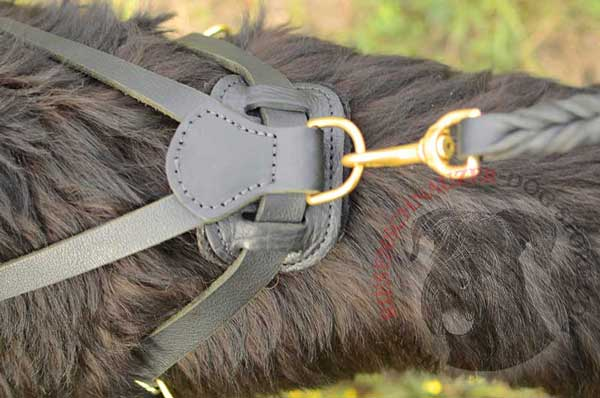 Back Plate with Stitched D-ring for Leash Attachment to Riesenschnauzer Harness