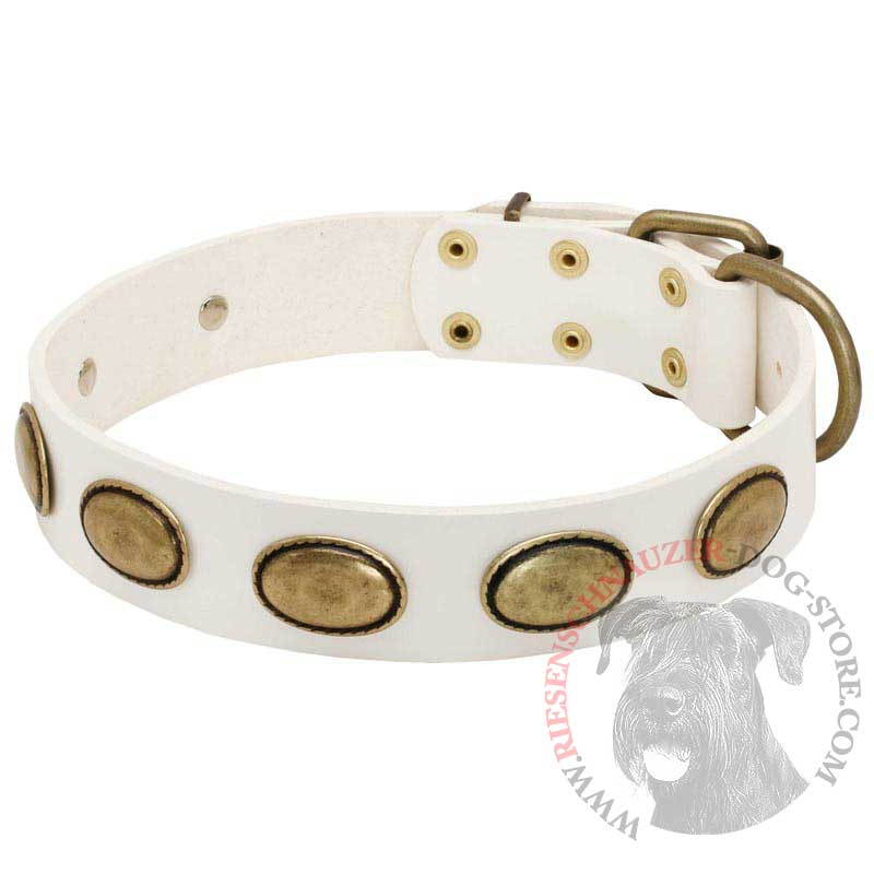 White Leather Riesenschnauzer Collar with Brass Oval Plates