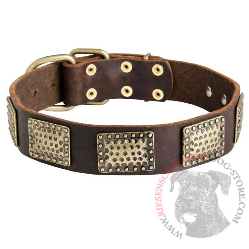 Leather Riesenschnauzer Collar with Massive Brass Plates