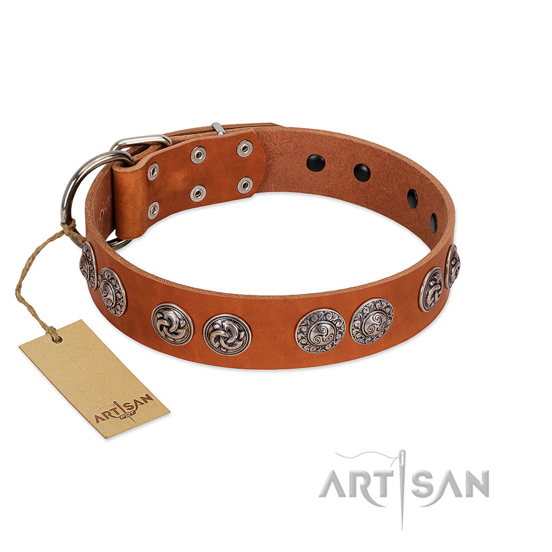 """Woofy Majesty"" FDT Artisan Tan Leather Riesenschnauzer Collar with Round Silver-like Plates"