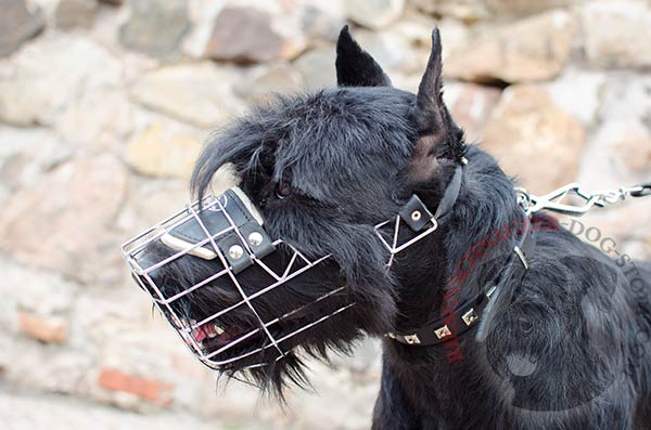 Easy-to-adjust Riesenschnauzer muzzle with one strap