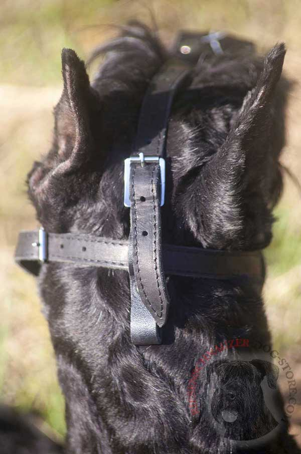 Non-Stretching Straps and Solid Nickle Buckles of Riesenschnauzer Painted Muzzle
