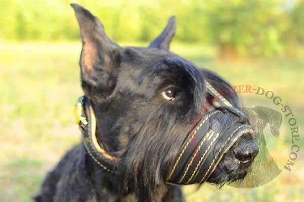 Leather Muzzle for Riesenschnauzer Anti-Barking