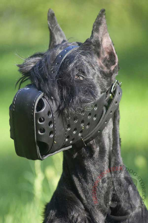 Leather Muzzle for Effective Riesenschnauzer Attack Training
