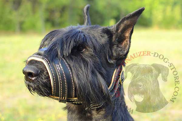 Nappa Leather Covered Riesenschnauzer Muzzle with Open Nose Shape