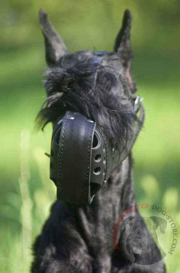 Leather Muzzle for Riesenschnauzer Free Breathing and Comfy Walking