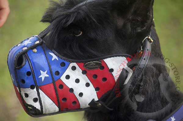 Riesenschnauzer Muzzle American Flag Painted for Successful Protection Training