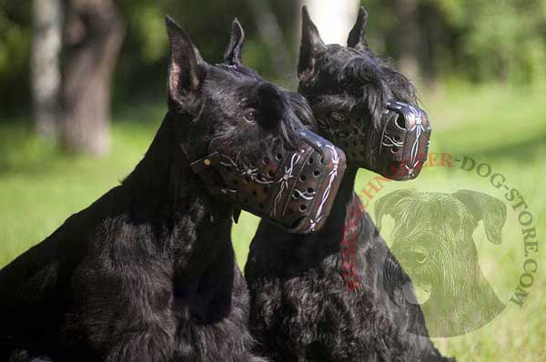 Hard Training Leather Riesenschnauzer Muzzle