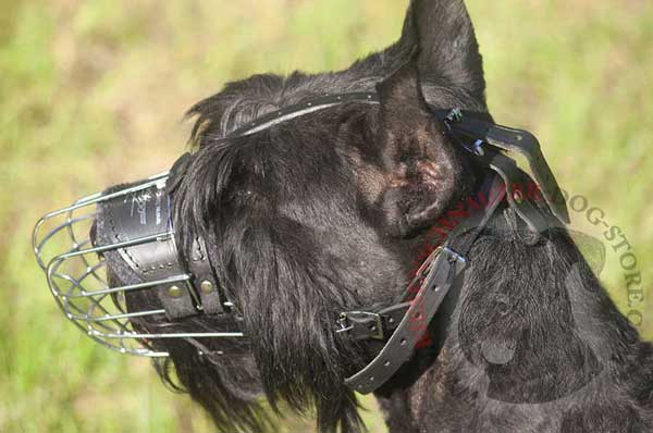 Wire Basket Muzzle for Riesenschnauzer with Durable Leather Straps