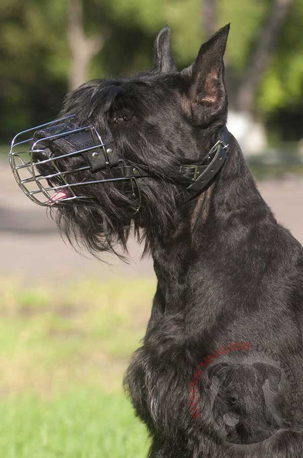 Air Ventilated Metal Cage Riesenschnauzer Muzzle