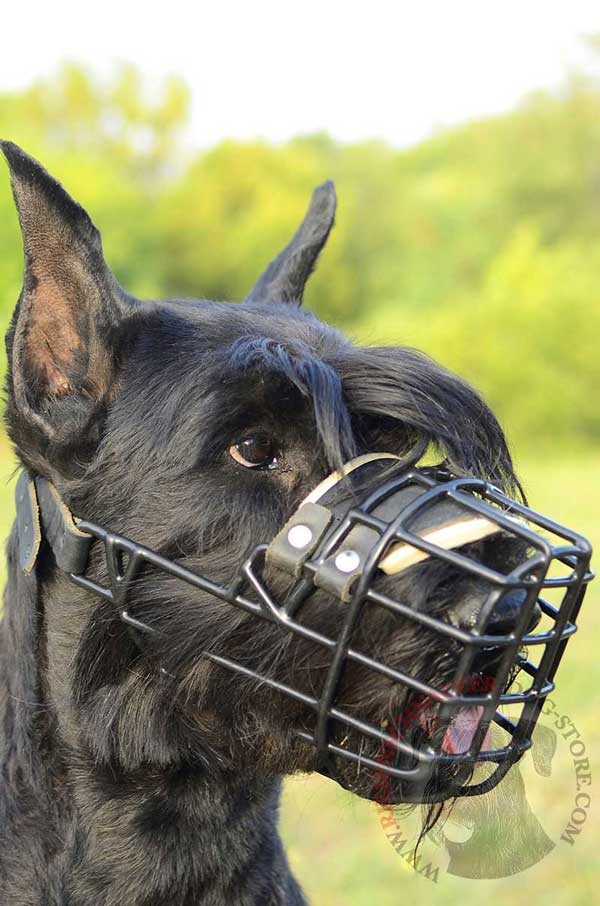 Easily Adjustable Wire Cage Riesenschnauzer Muzzle with Soft Padding