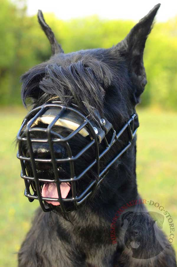 Rubber Covered Wire Cage Muzzle for Riesenschnauzer Walking in Winter