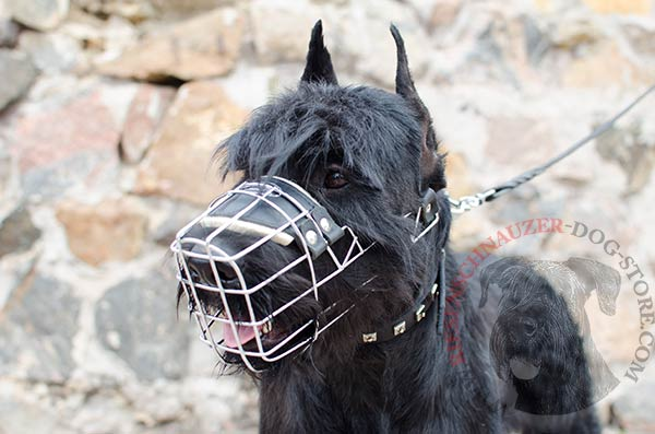 Padded nose metal basket for Riesenschnauzer