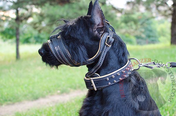 Anti-barking Nappa padded leater muzzle for Riesenschnauzer