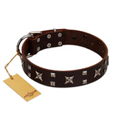 """Bigwig Woof"" FDT Artisan Brown Leather Riesenschnauzer Collar with Chrome Plated Stars and Square Studs"