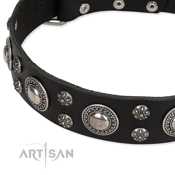 Stylish walking embellished dog collar of strong natural leather