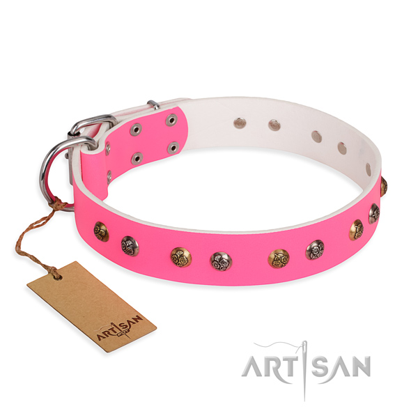 Fancy walking fine quality dog collar with rust resistant traditional buckle