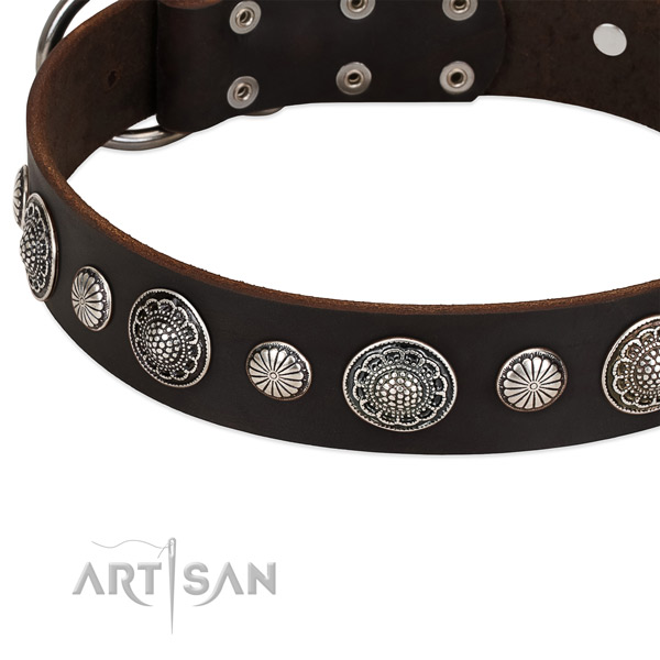 Natural leather collar with rust resistant fittings for your stylish four-legged friend
