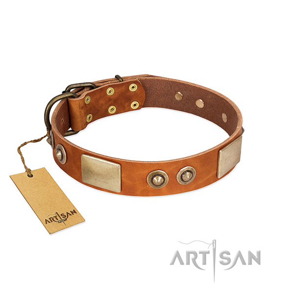 Adjustable genuine leather dog collar for stylish walking your four-legged friend