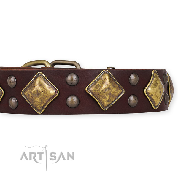 Full grain leather dog collar with designer corrosion resistant embellishments