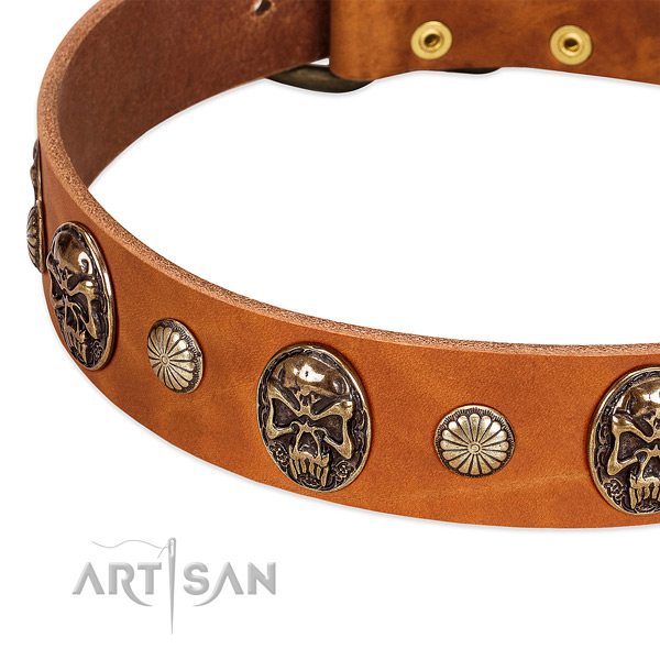 Corrosion resistant D-ring on leather dog collar for your four-legged friend