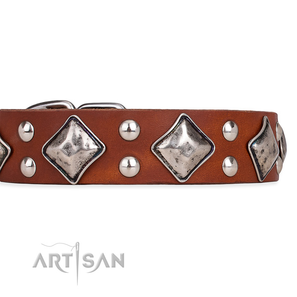 Full grain natural leather dog collar with trendy corrosion resistant embellishments
