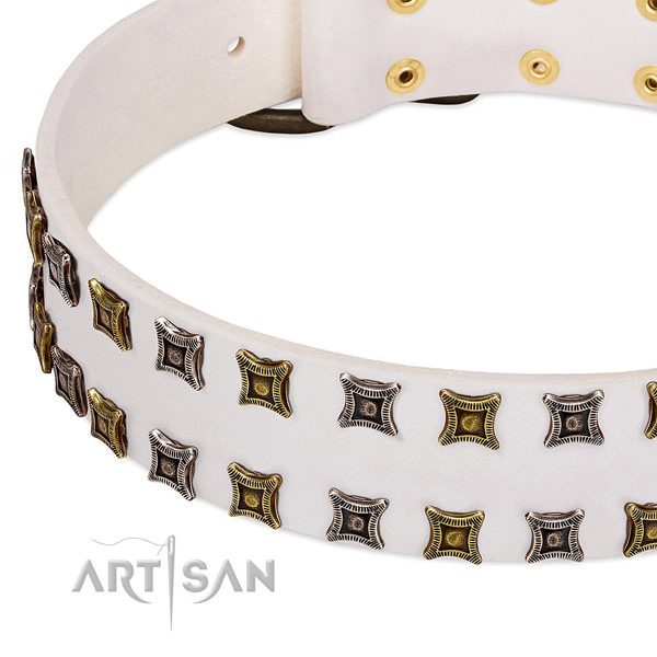 Leather dog collar with adornments for your stylish dog