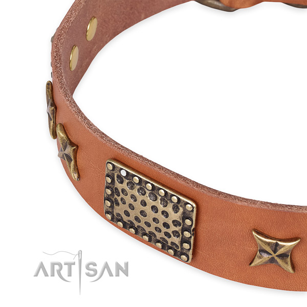 Full grain leather collar with corrosion proof fittings for your beautiful pet