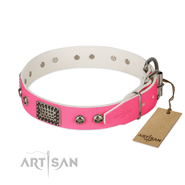 Durable hardware on everyday walking dog collar