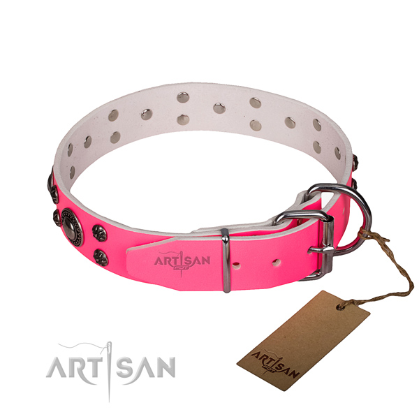 Fancy walking decorated dog collar of strong full grain leather