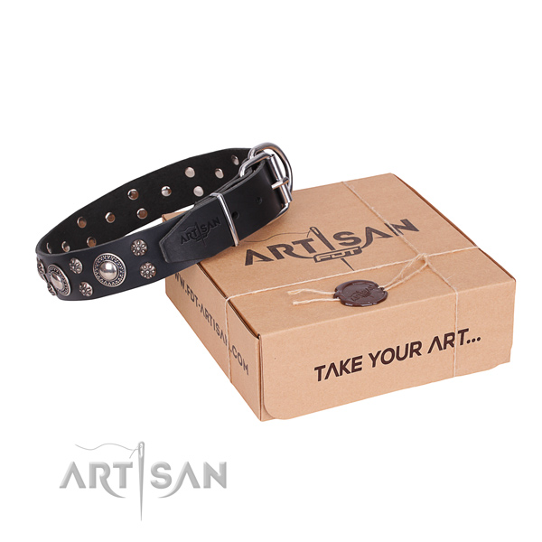 Fancy walking dog collar of best quality full grain genuine leather with studs