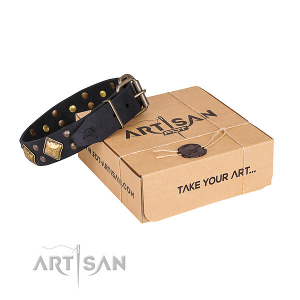 Everyday walking dog collar with Exceptional rust resistant embellishments