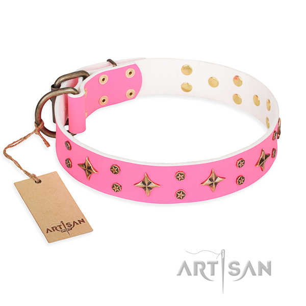 Everyday walking dog collar of durable natural leather with studs