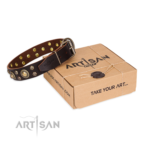 Everyday use dog collar of fine quality genuine leather with studs