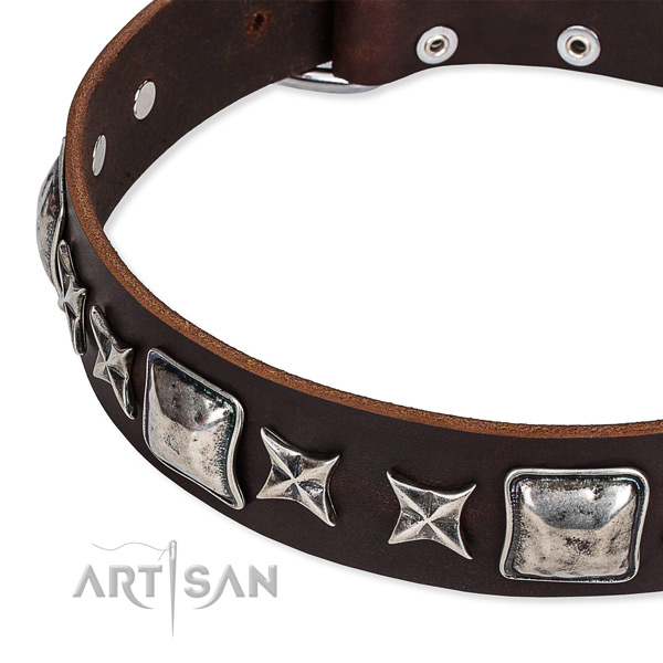 Everyday use studded dog collar of finest quality full grain leather