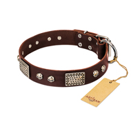 """Pirate Skull"" FDT Artisan Brown Leather Riesenschnauzer Collar with Old Silver Look Plates and Skulls"