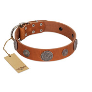 """Foxy Nature"" FDT Artisan Tan Leather Riesenschnauzer Collar with Chrome Plated Brooches"