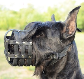 Purchasing the Right Muzzle